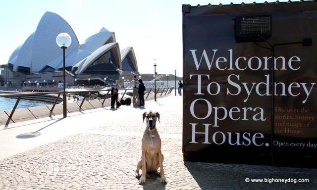 Honey+OperaHouse+sign