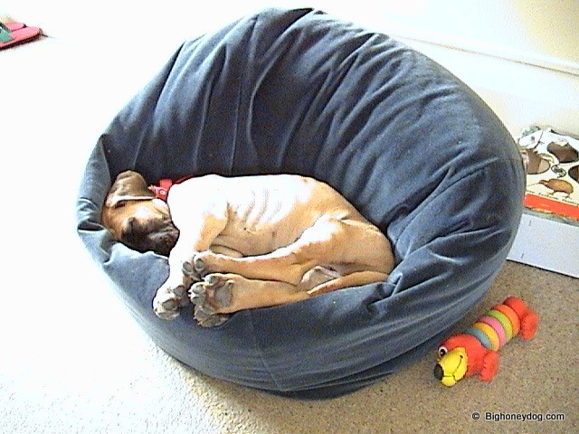 Honey-sleep-beanbag