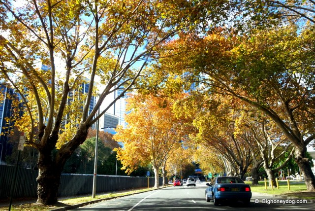 Perth-autumn