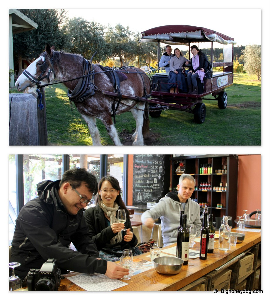 going on a tour of vineyards in the nearby Swan Valley on a horse-drawn wagon!